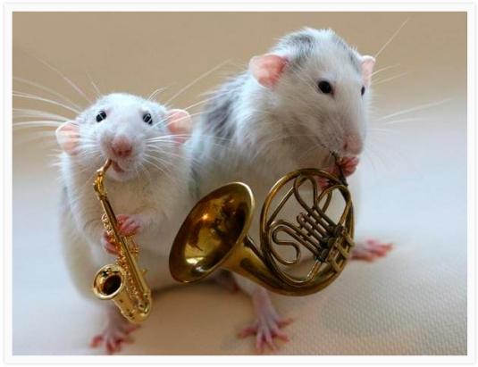 Rats Orchestra1.jpg